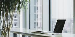 Modern office laptop plants large windows