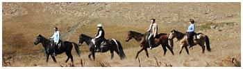 pic_horse4