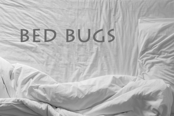 how can i get rid of bed bugs by myself. Black Bedroom Furniture Sets. Home Design Ideas