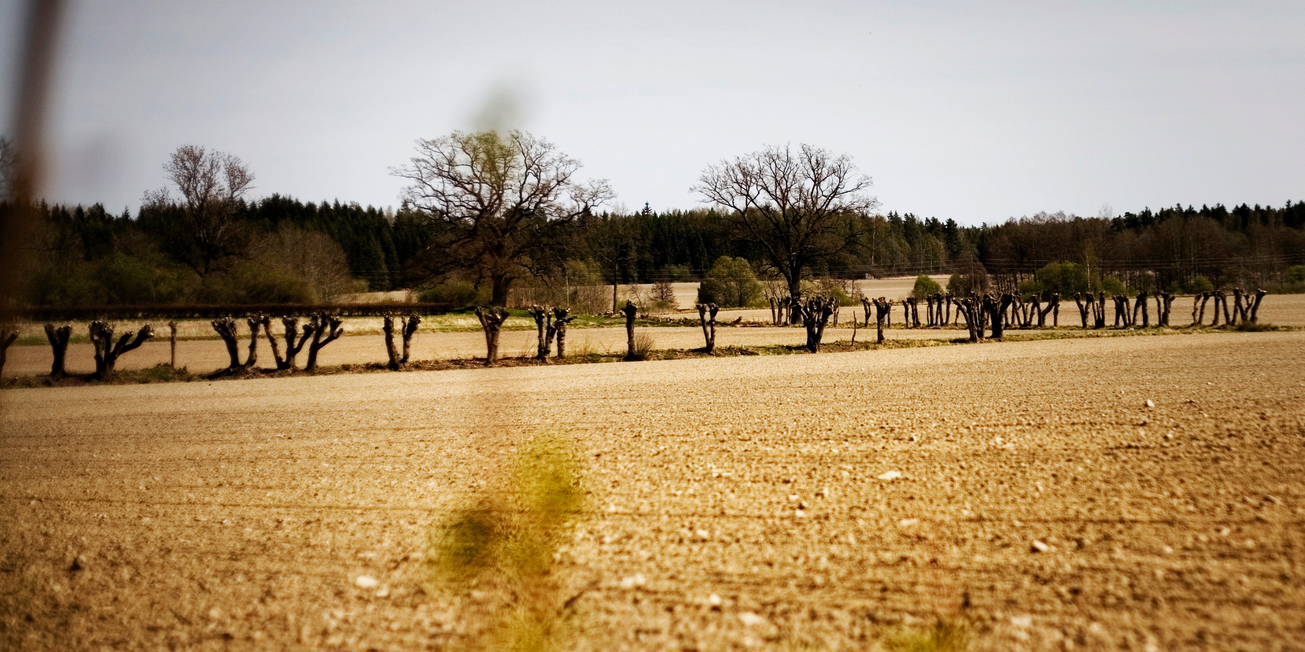 jordbruks-dejtingsajt kommersiella