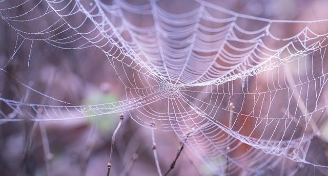 cobweb-1868997_640
