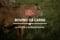 Le 3 età e la macellazione del bovino da carne