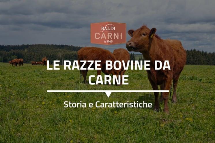 Le-razze-bovine-da-carne-14