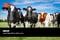 HACCP nella filiera della carne