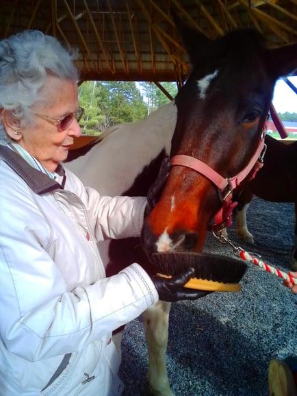 SW horses