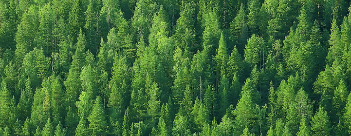 Kichigin by Shutterstock a a green forrest pictured from the sky