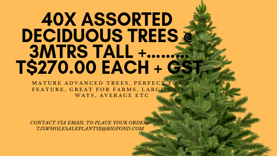 40X ASSORTED DECIDUOUS TREES @ 3MTRS TALL +………$270.00 EACH + GST MATURE ADVANCED TREES, PERFECT FOR A FEAUTURE, GREAT FOR FARMS, LARGE DRIVE WAYS, ACERAGE ETC…..