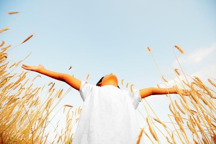 Little boy on a wheat field in the sunlight