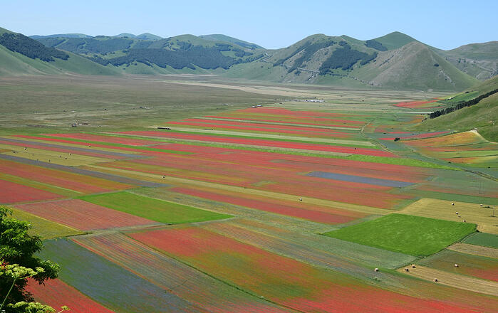 DHvillas-Flowering in Castelluccio di Norcia