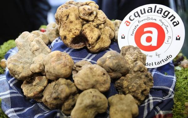 DHvillas-The White Truffle Fair in Acqualagna