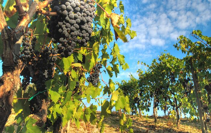 DH Villas - Wine tasting and tours of vineyards