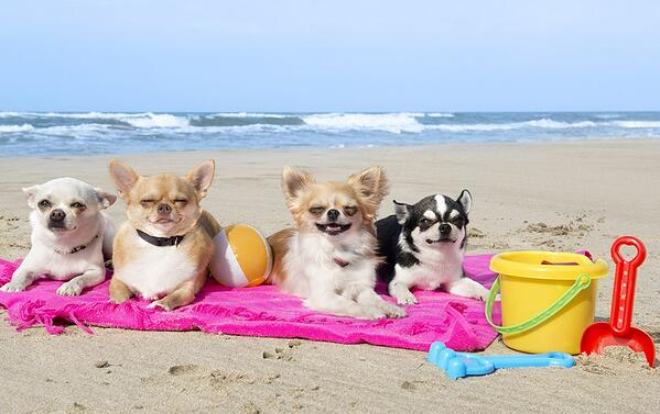 DH Villas - Pet friendly holidays in Le Marche region