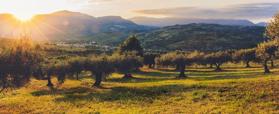 Mulching Branches and Vegetative Soil Coverage in Olive Grove Management