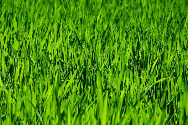 The Greener Grass Myth - and Other Things I've Learned Working in Retail