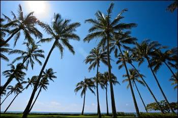 california-palm-sunshine