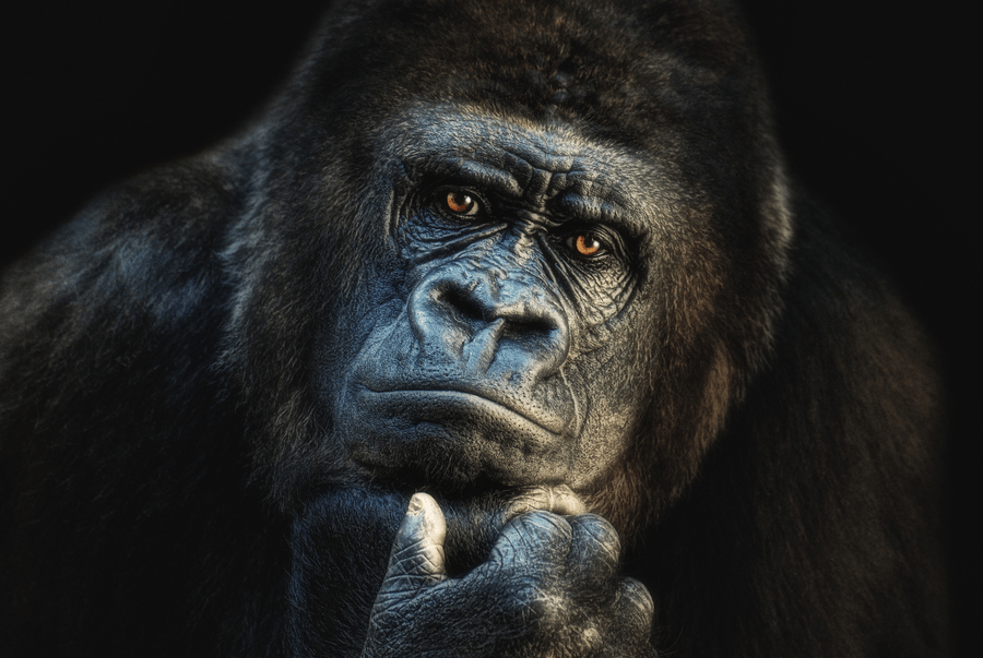 Travel Risk Management: You or the Gorilla?