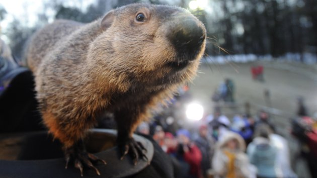 http://abcnewsradioonline.com/storage/news-images/GETTY_N_020212_Punxsutawney%20Phil.jpg?__SQUARESPACE_CACHEVERSION=1328185724555