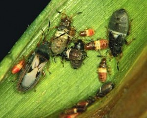 Worst Lawn Pests And How To Get Rid Of Them