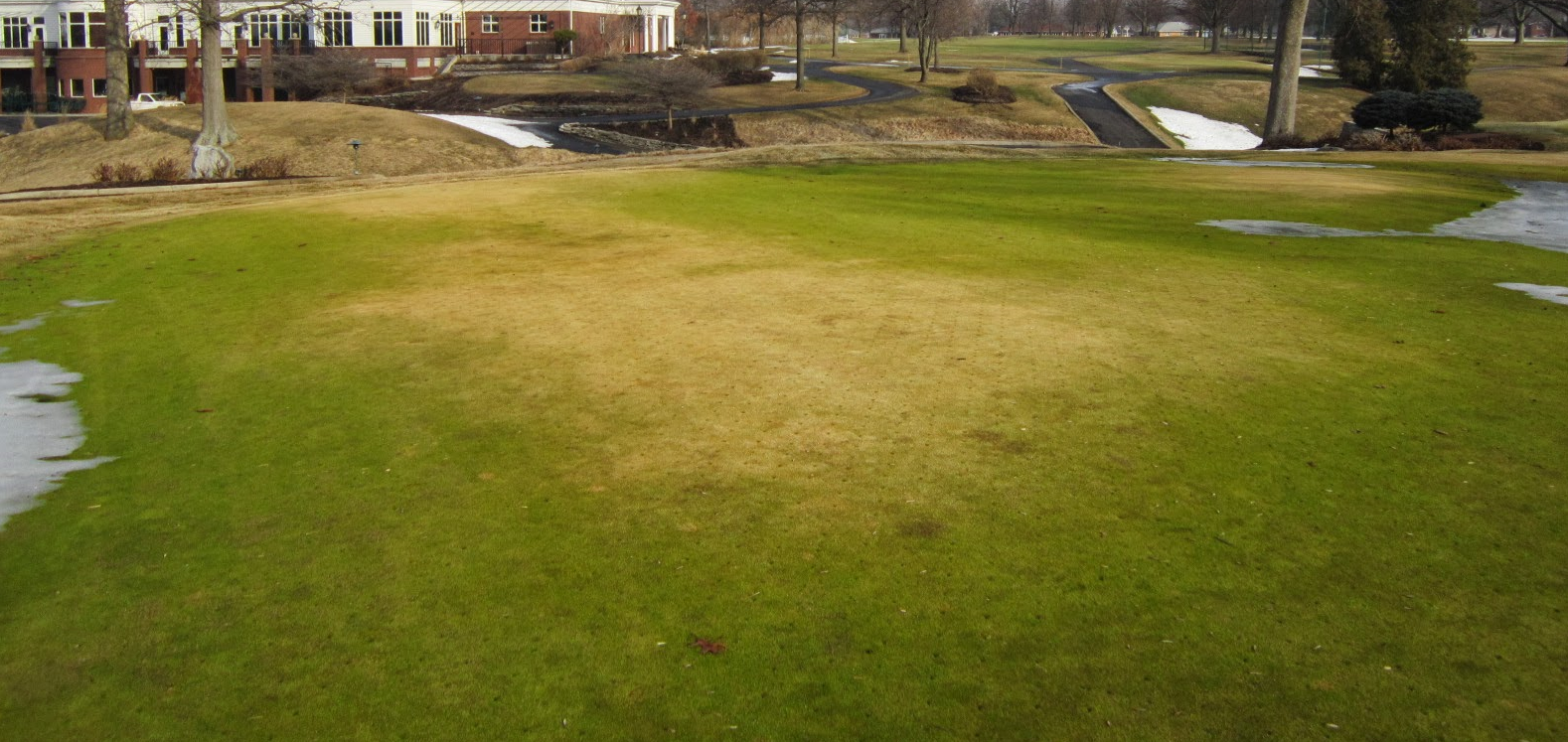 Winter Lawn Tips Winter Desiccation