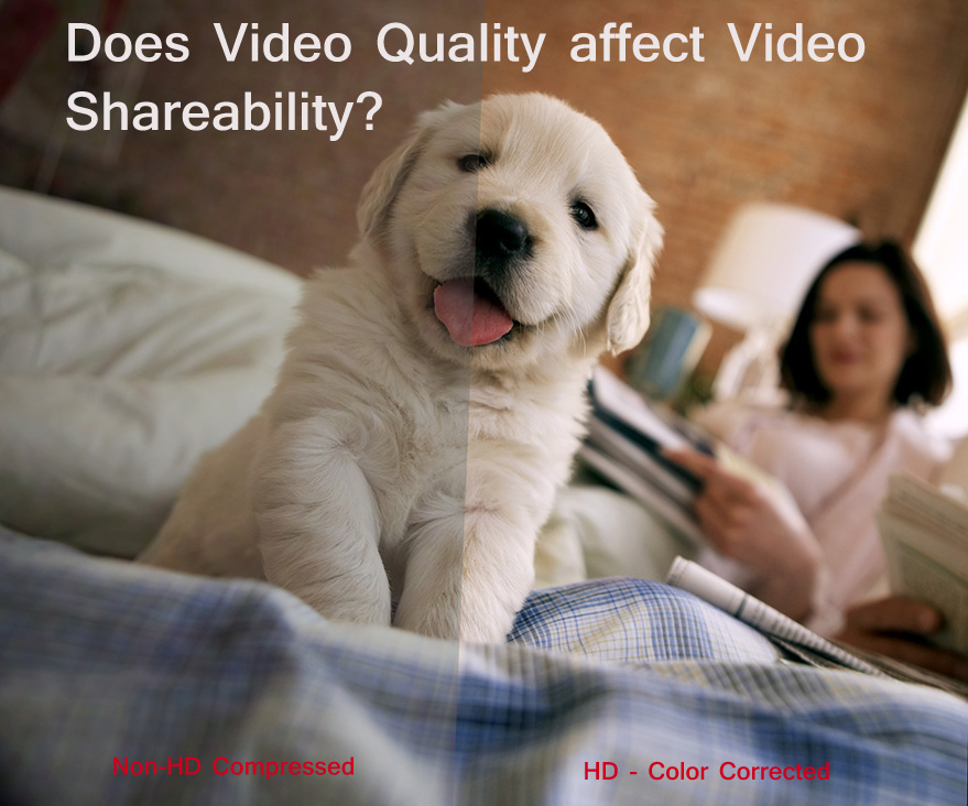Quality Before & After   Puppy3 copy