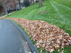 Leaf_pile.png