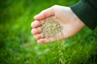 Seeding_Hand.jpg