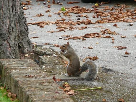 squirrel_london_england_city-871486