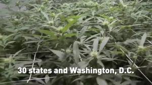 Marijuana legalization is creating business opportunities - CGTN America
