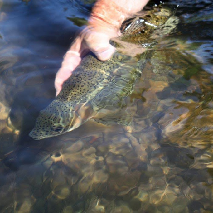 6 Tips For Effective Catch & Release Fishing