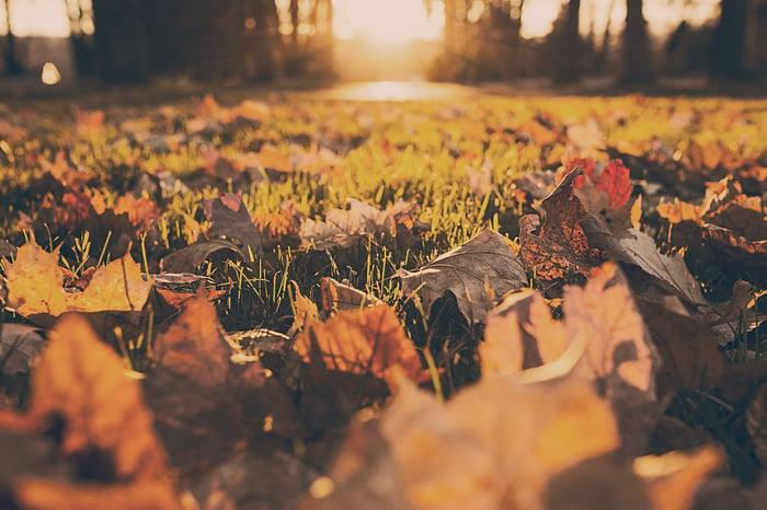 sejour-a-lyon-automne