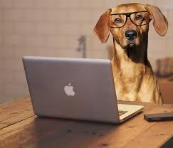 Why veterinary practices should consider online booking