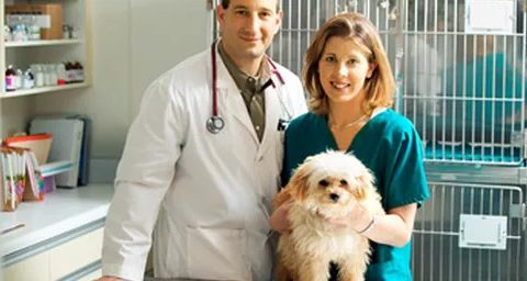 How Veterinarians Can Overcome Last Minute Cancellations and No-Shows