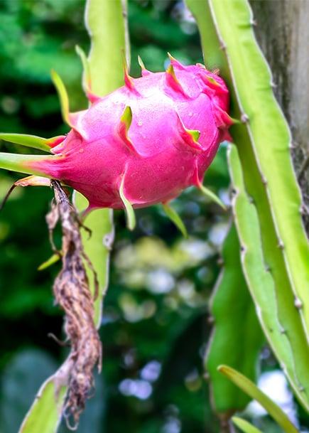 cactus_vertical