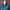 Sara Goris