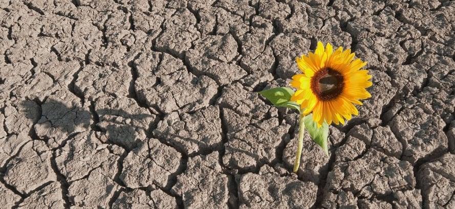 La-resilienza-dellu2019operatore-turistico-4.0-blog-settore-turistico-analisi-strategia-formazione-trentino-alto-adige-triveneto-italia