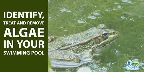 Identify Treat and Remove Algae in Your Swimming Pool