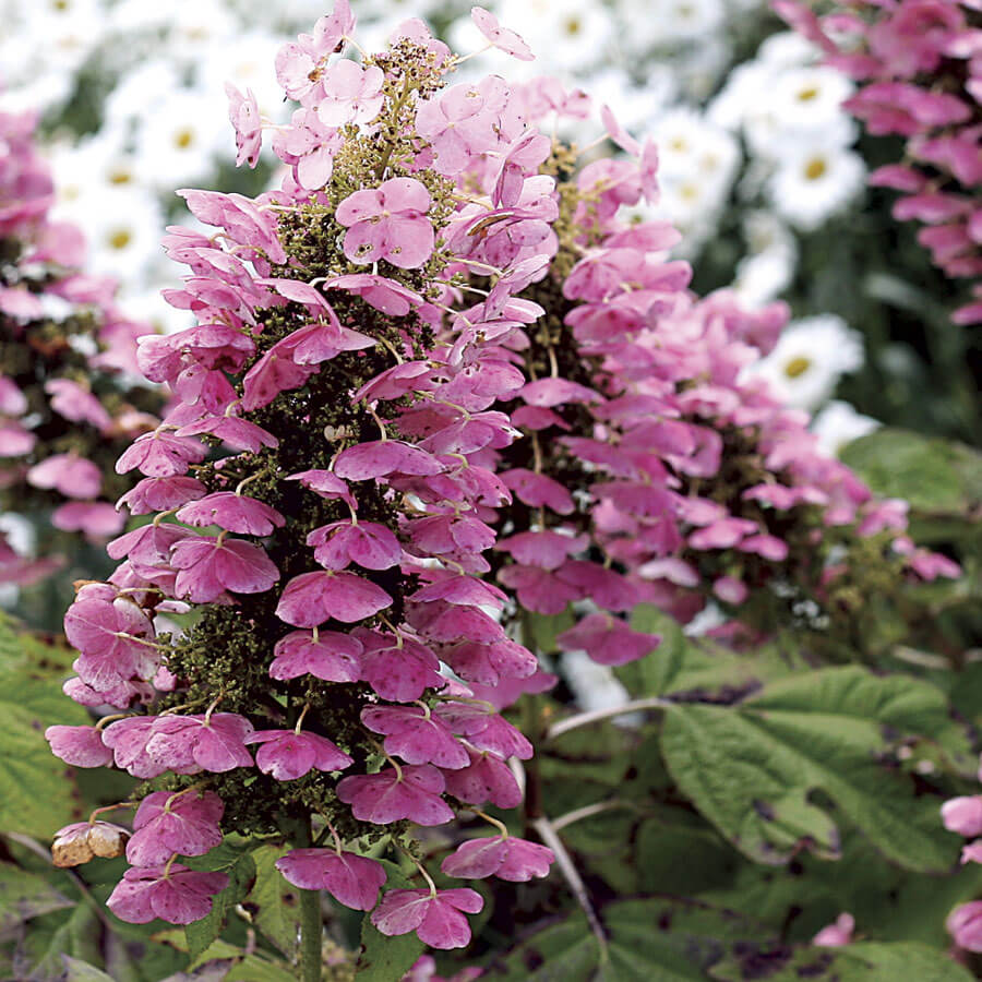 Easy-Care Shrubs You Can Plant Now