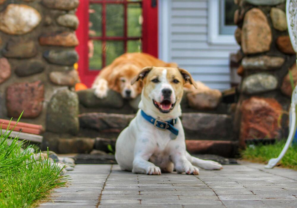 Making Your Yard Pet-Friendly in Winter