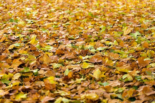 What To Do with Your Leaves