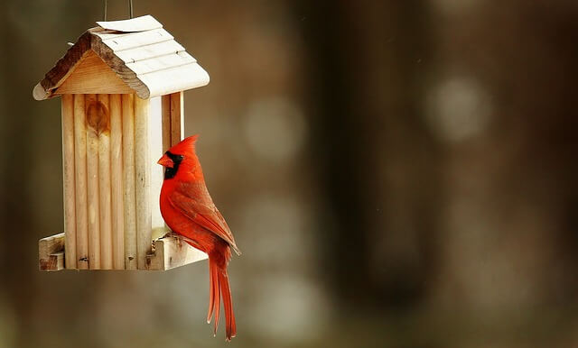 Small DIYs to Invite Birds and Bats to Your Backyard
