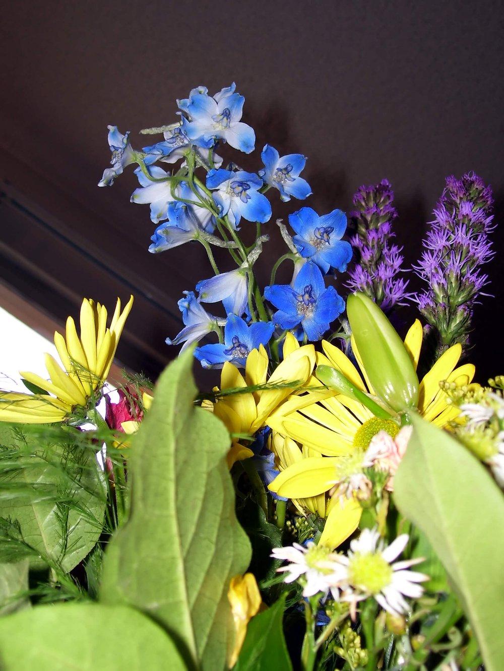 Summer Garden Plants That Complement Each Other