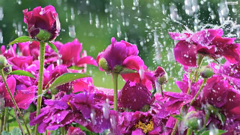 May Showers and Stormwater Management