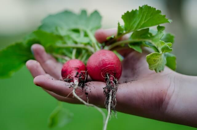 What To Do with Your Urban Garden at the End of the Season