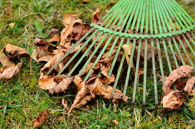 5 Fall Lawn Care Chores You Can't Afford to Skip