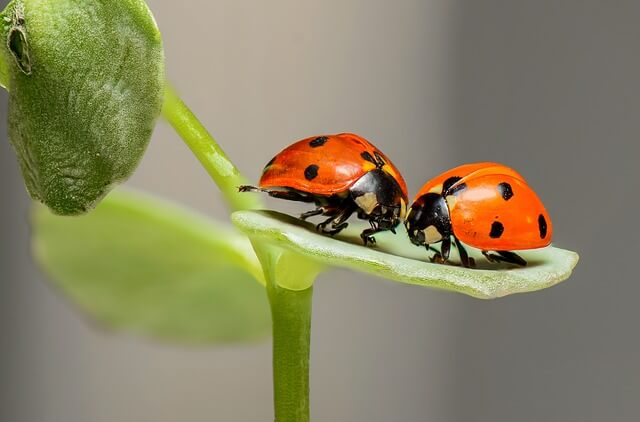 Insect Control Plants for Your Garden