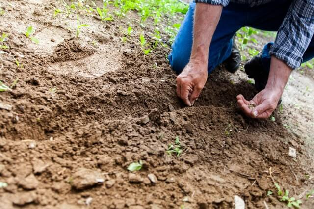 The Best Soil for Every Garden