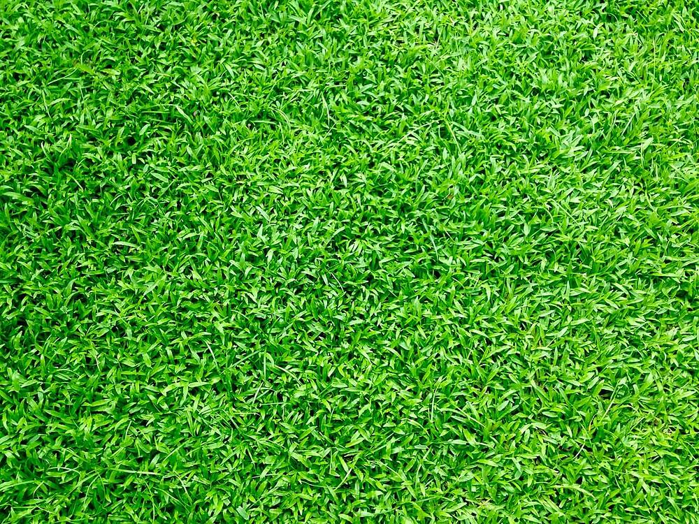Sports Turf is a Real Winner!