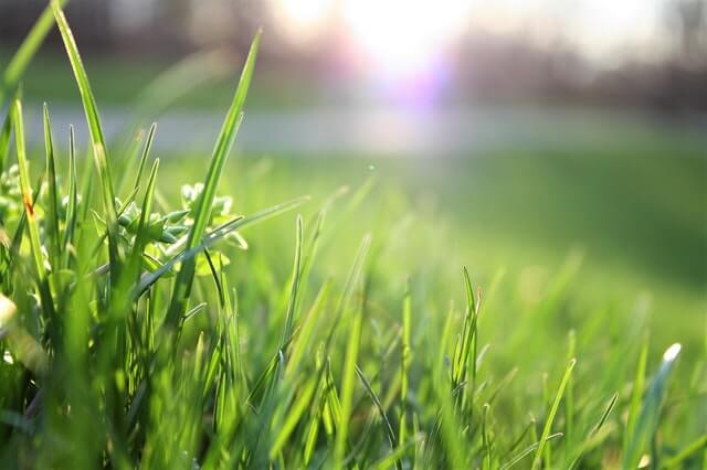 7 Tips for Fertilizing Your Lawn This Spring