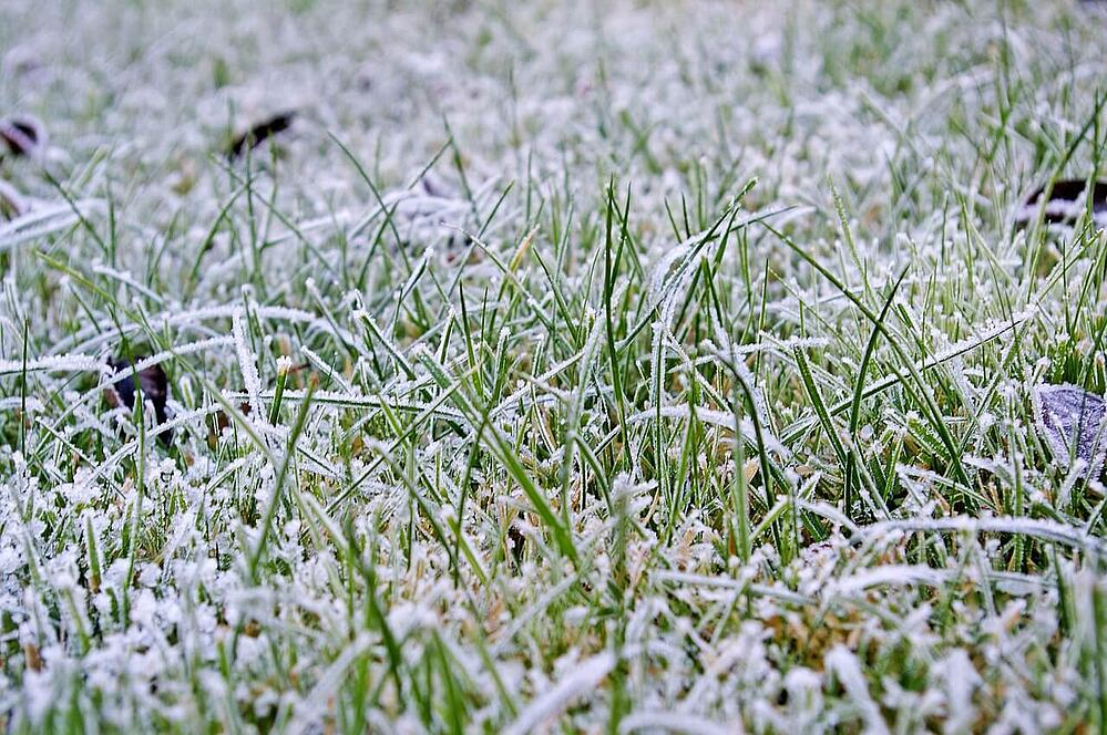 Should You Mow Your Lawn During the Winter?