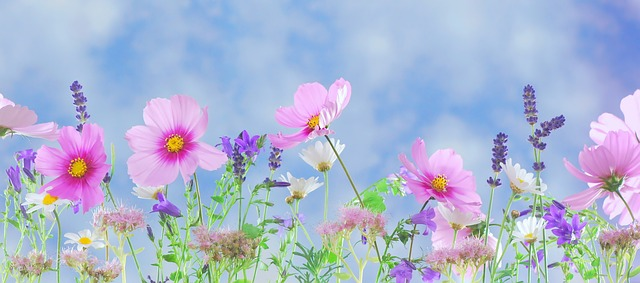 Easy-Care Flowers for the Lazy Gardener